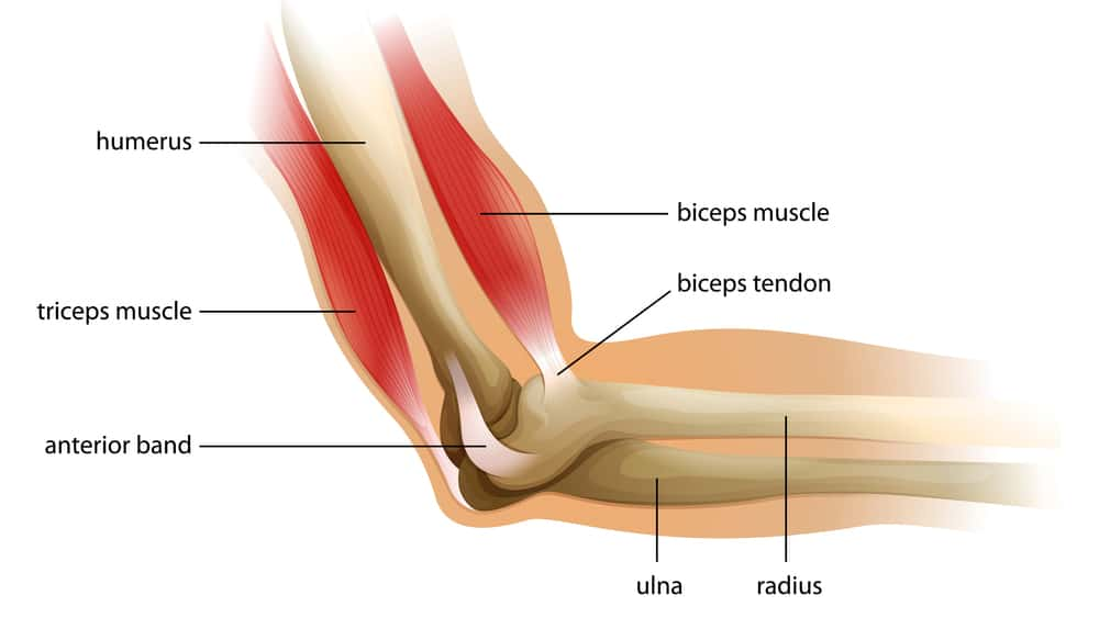 Elbow Surgeons in Dubai - Orthosports Medical Center